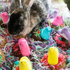 No Bake Cookie Easter Peeps Nests